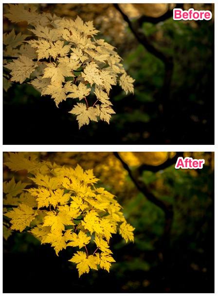 黄色が鮮やかになった