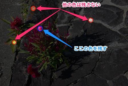赤い花の色だけを残す