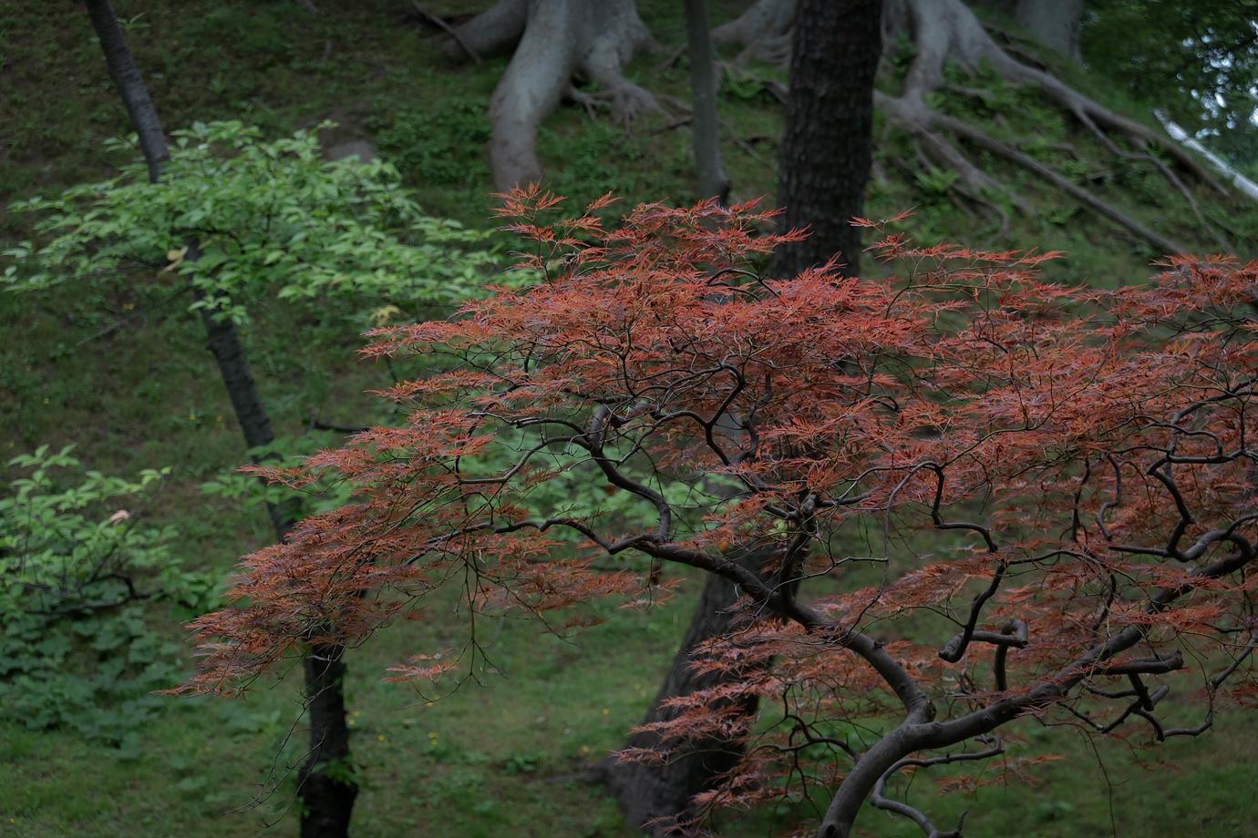 紅葉色の葉をつけた木