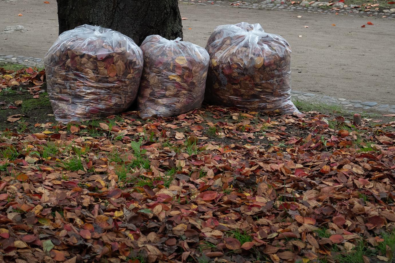 落ち葉を詰めたごみ袋