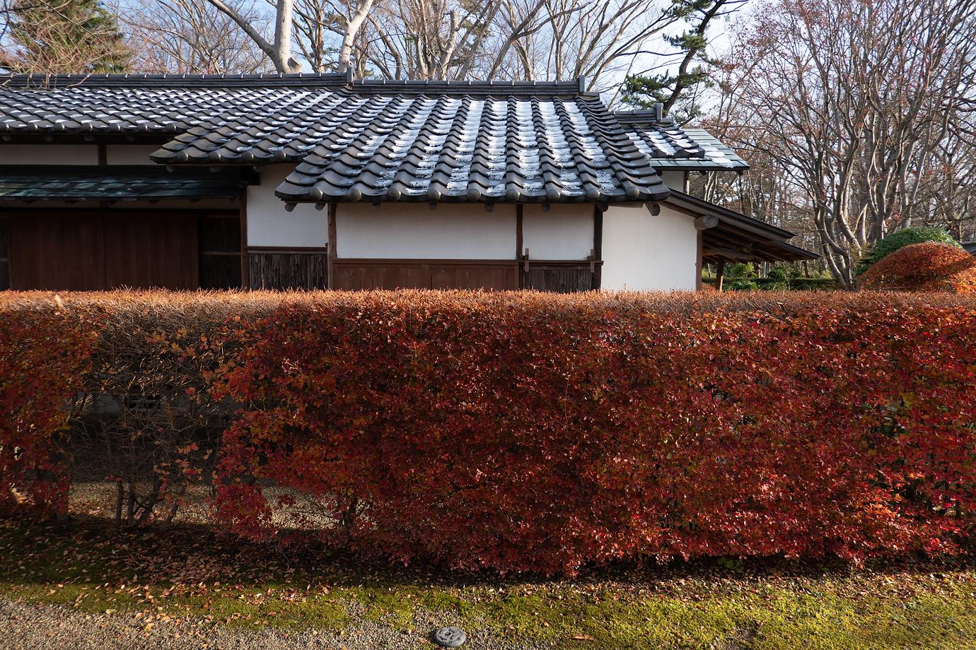 紅葉と建物