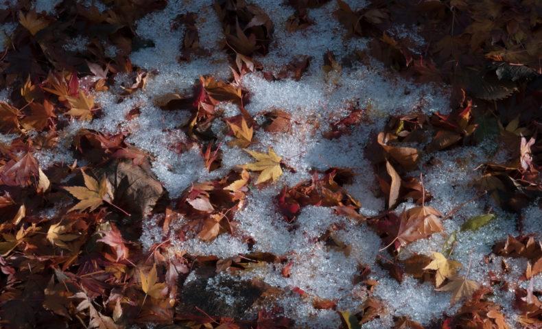 落ち葉と雪