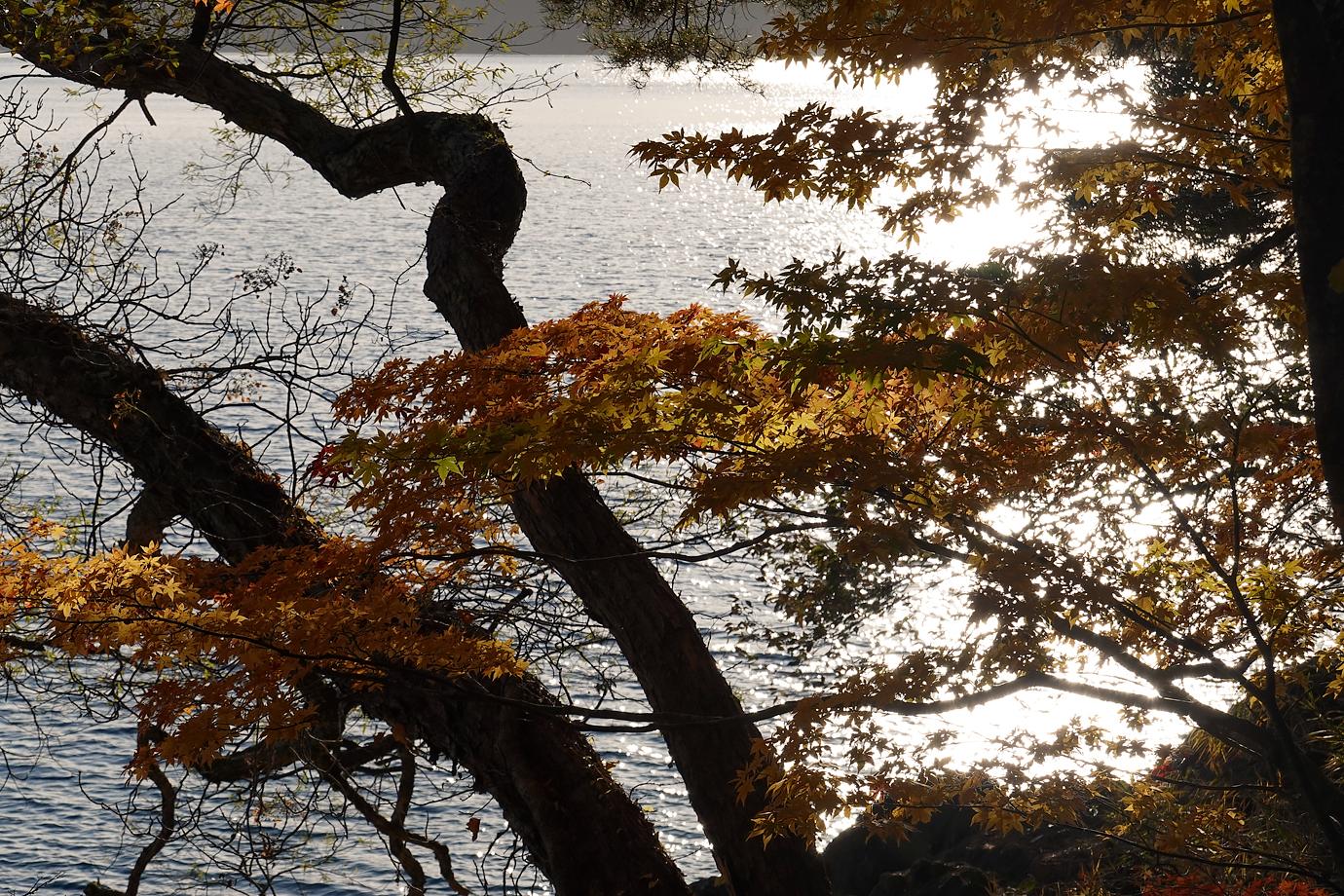 田沢湖と紅葉