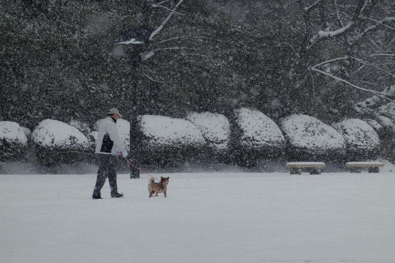 大雪の中の犬の散歩