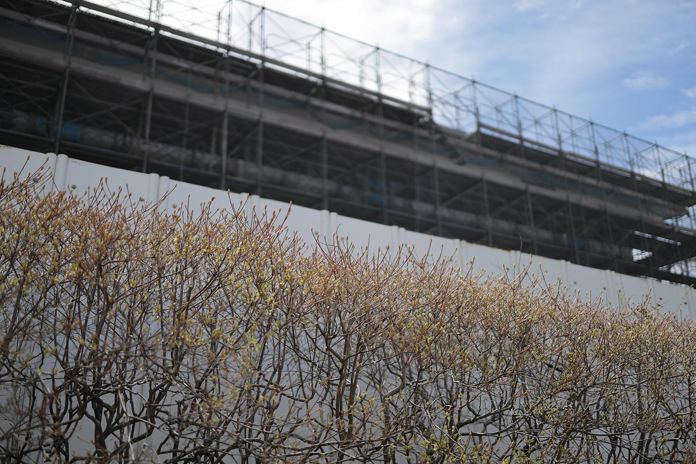 植物と工事中の建物