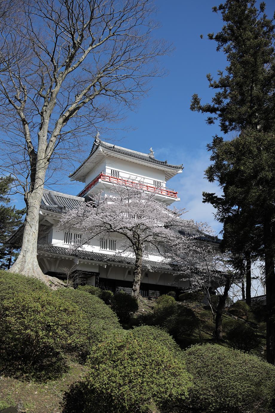 久保田城と桜