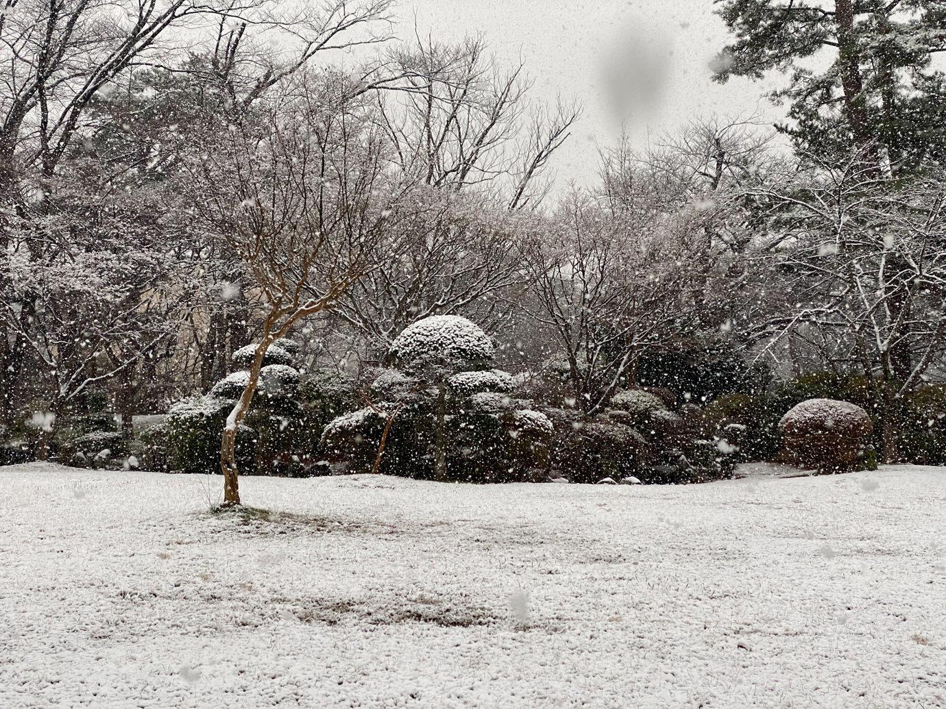 芝生につもる雪