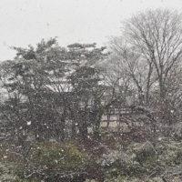 雪が降る千秋公園