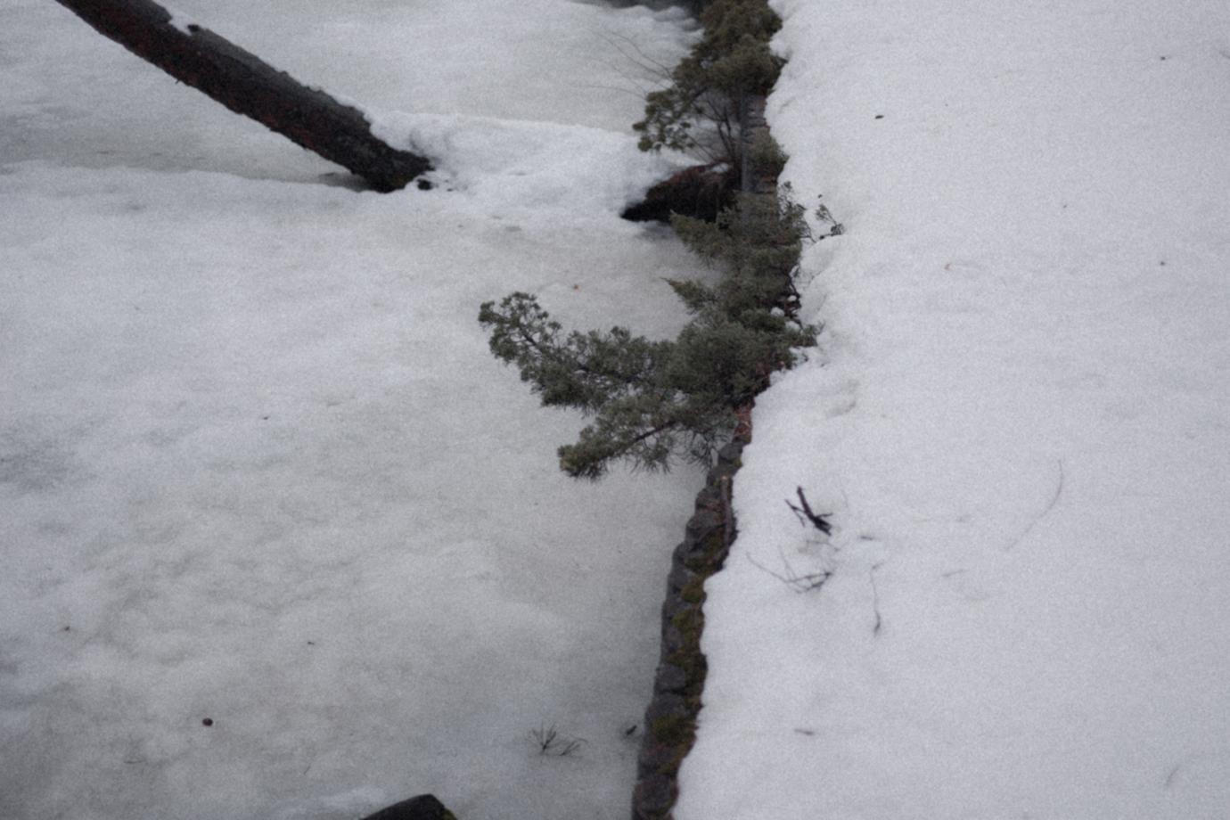 植物と池の氷