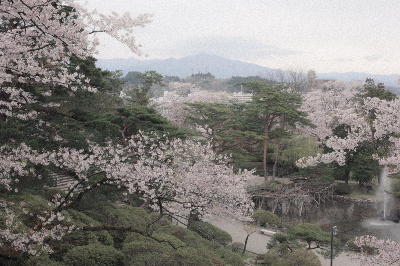 春の千秋公園