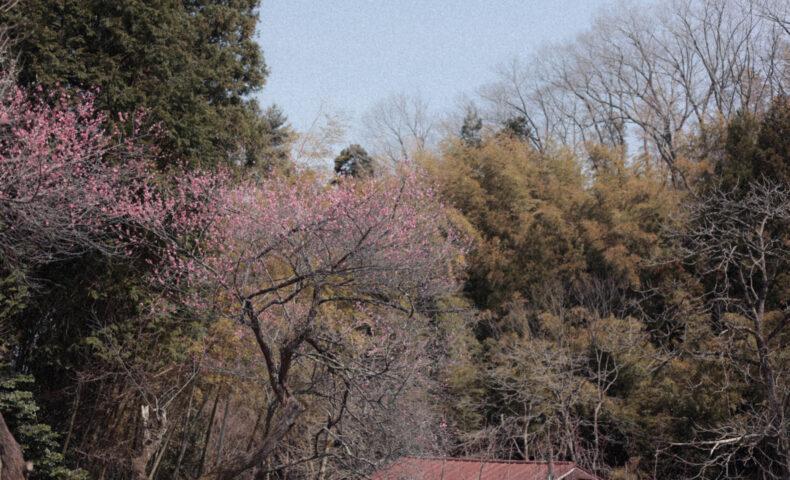 湯田川温泉 梅林公園